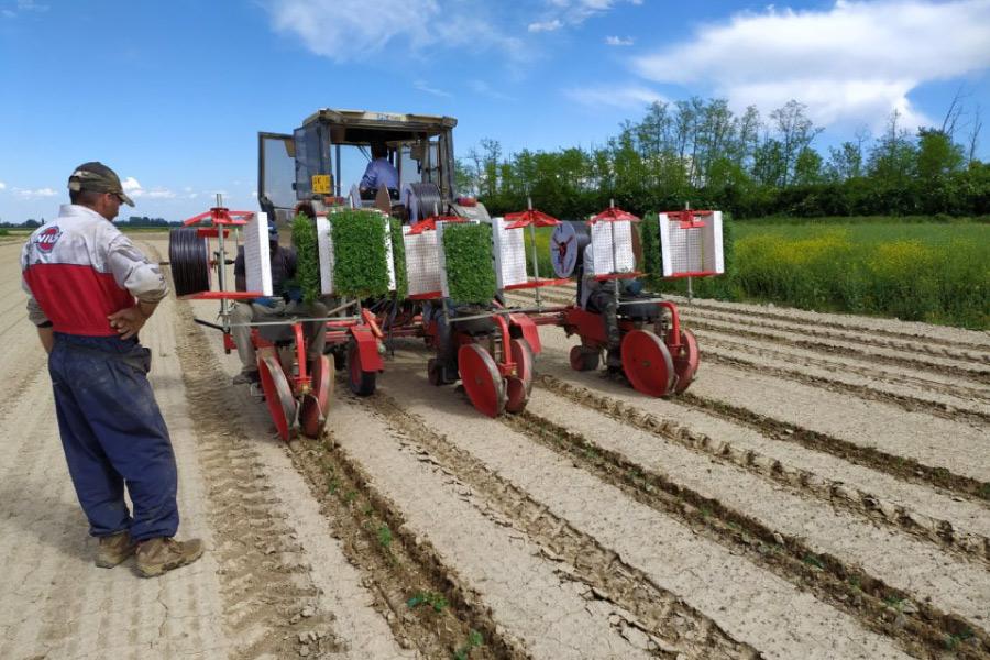 Progetto Monitora - servizio di monitoraggio avanzato per l'irrigazione e fertilizzazione sostenibile e difesa integrata per le orticole di pieno campo
